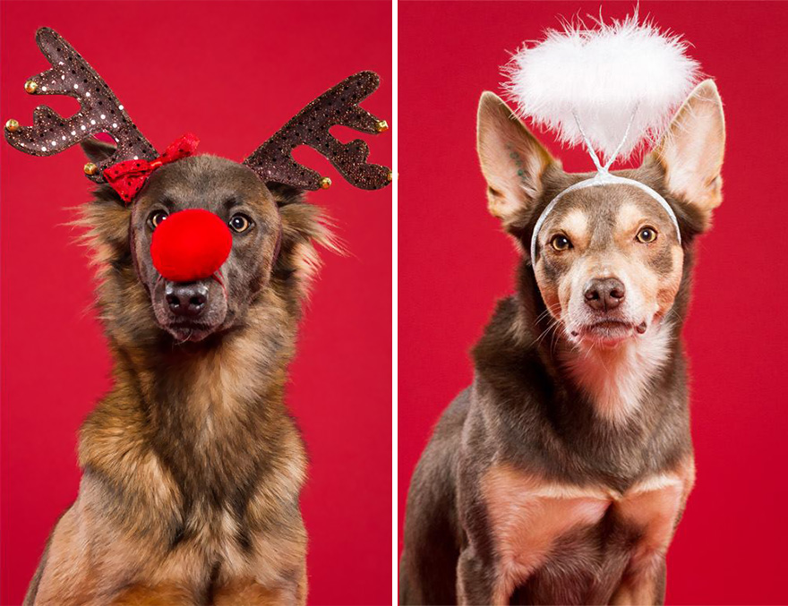 I Took Christmas-Themed Dog Portraits To Wish You Happy Holidays ...