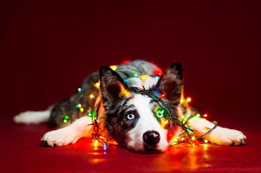 Świąteczny pies - Daniel Gatio