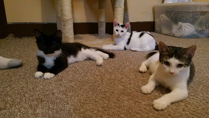 I Turned My Spare Bedroom Into A Foster Room For 24 Cats