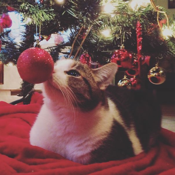 Why Fill The Bottom Of The Tree With Presents When You Have A Cat