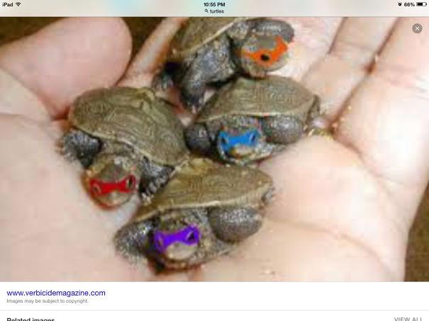 Teenage Mutant Ninja Turtles1