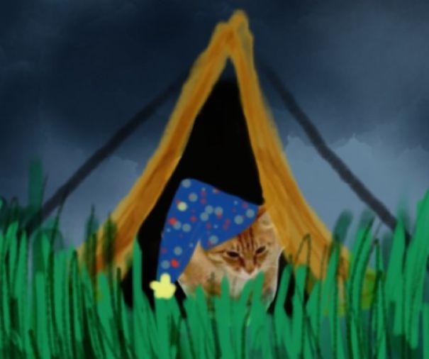 Kitty Camping