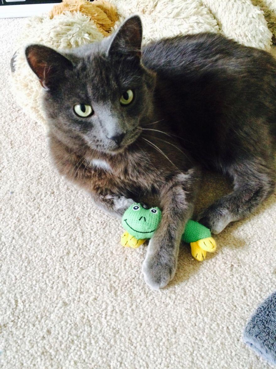 Zeus Featuring Mr. Frog