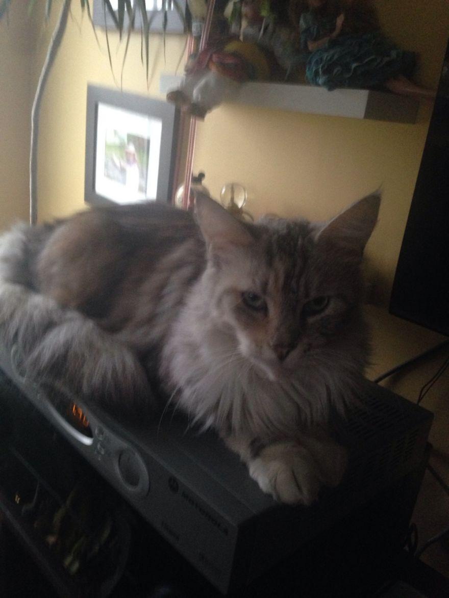 Sassy Cat Woke Up From Her Beauty Sleep