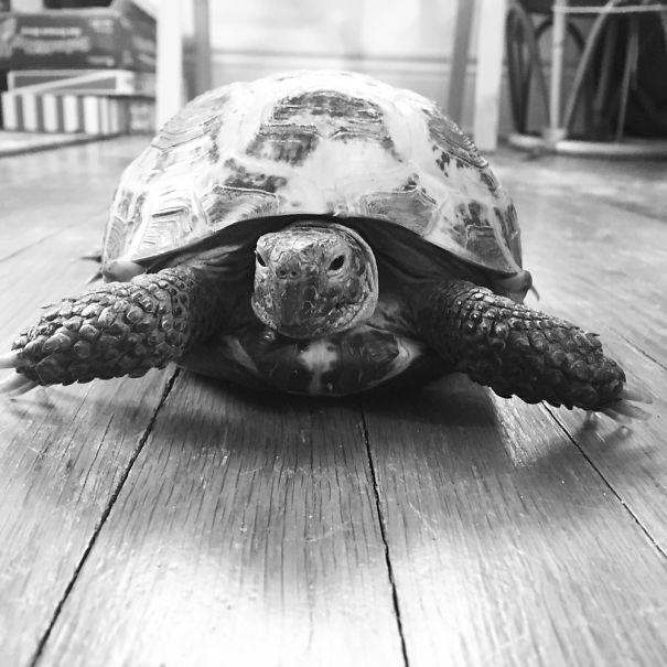 Bella The Tortoise.