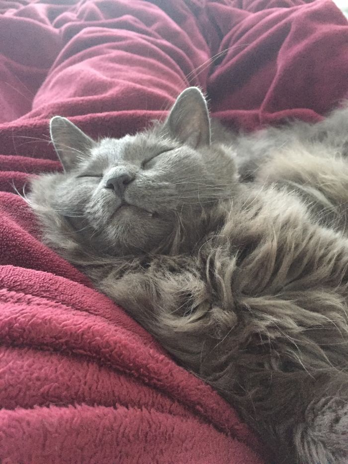 This Is My Fluff. His Name Is Ull. It Means Wool In Swedish.