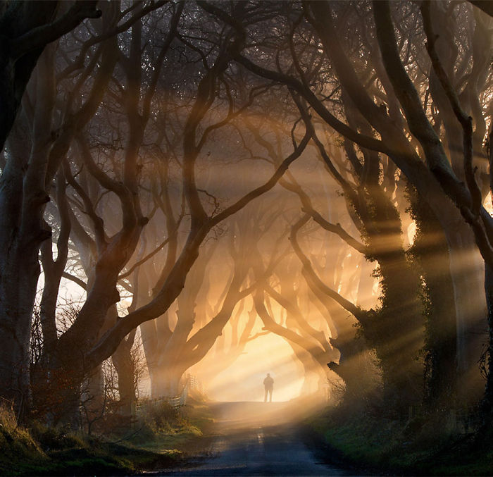 Stunning Tree Tunnel From 'Game Of Thrones' In Northern Ireland