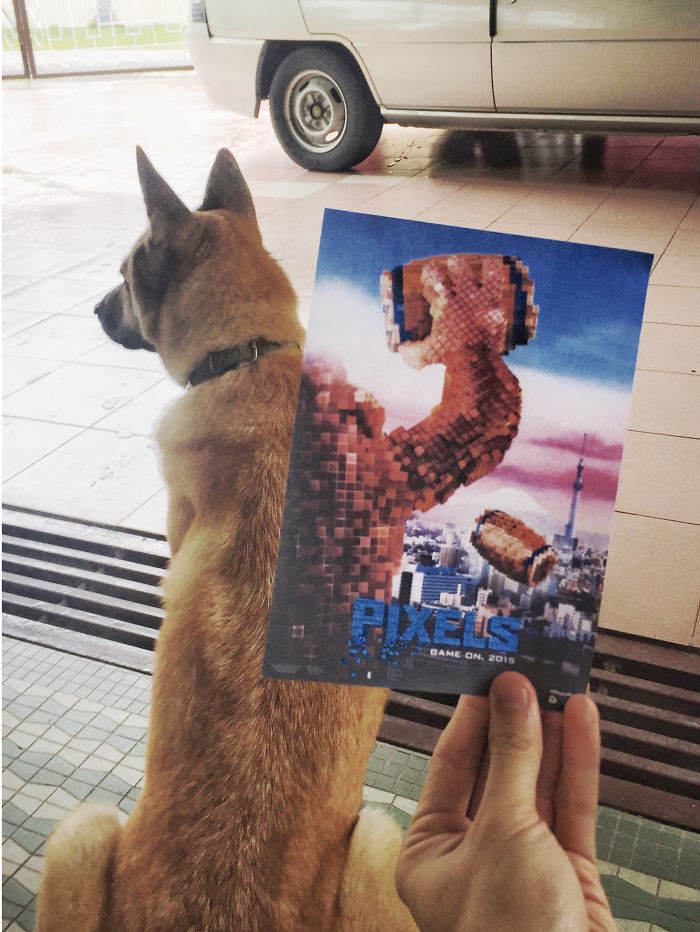 Instagrammer Combines Famous Movie Posters With Real-Life Puppies