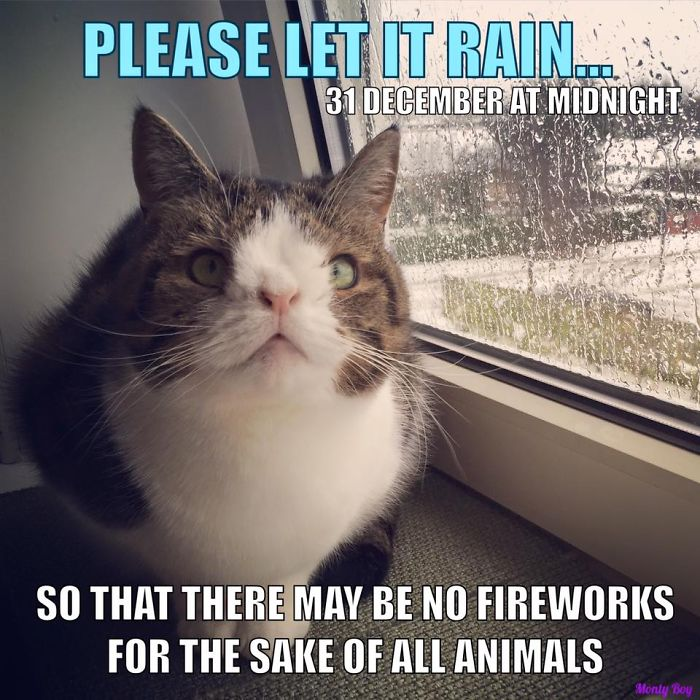 Keep Your Furry Friends Safe This New Year