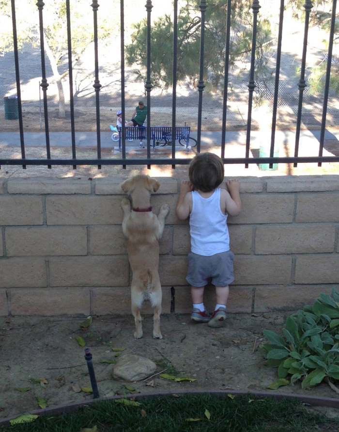 Dog And Kid Just Staring Together
