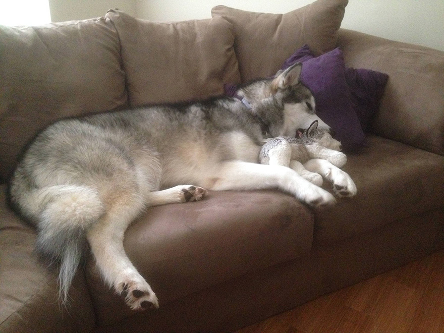 malamute-luca-dog-toy-forever-karissa-lerch-2