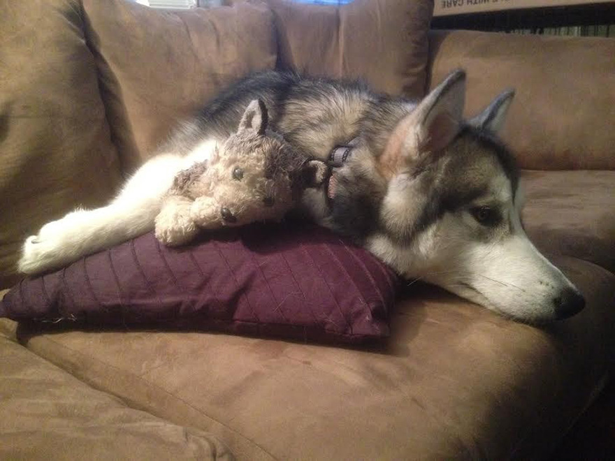 malamute-luca-dog-toy-forever-karissa-lerch-4