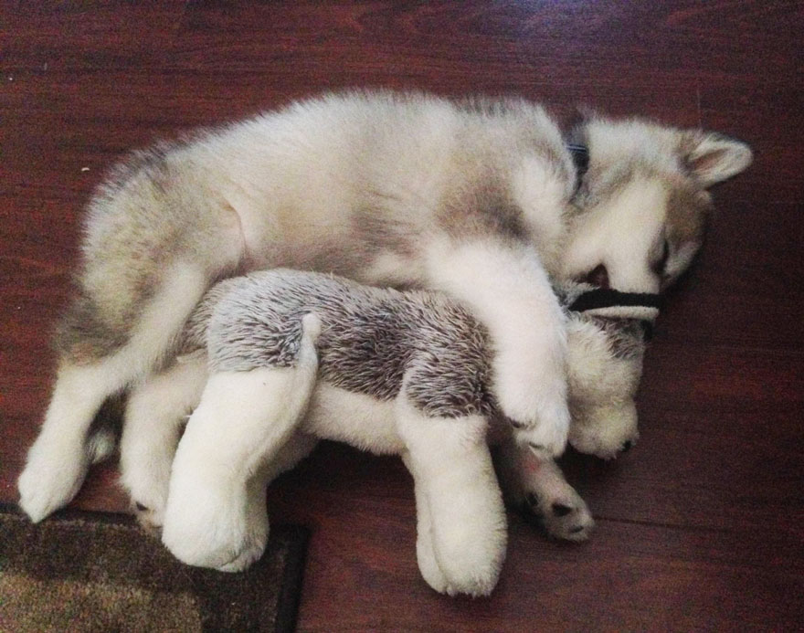 Then Amp Now This Dog Destroys Every Stuffed Animal Except
