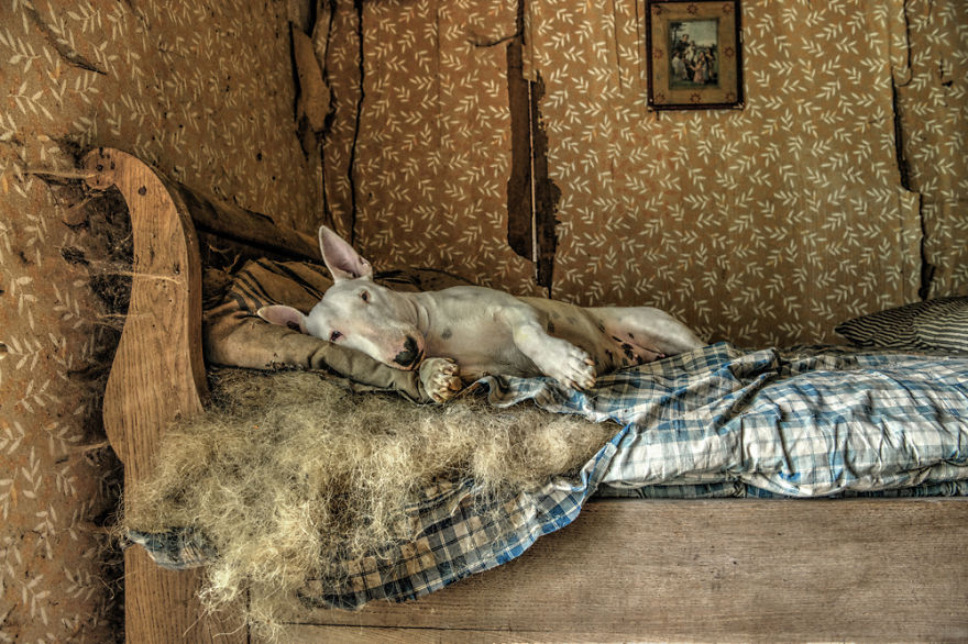 My Dog And I Explore Abandoned Places Across Europe Bored Panda,House Plans Under 400 Square Feet