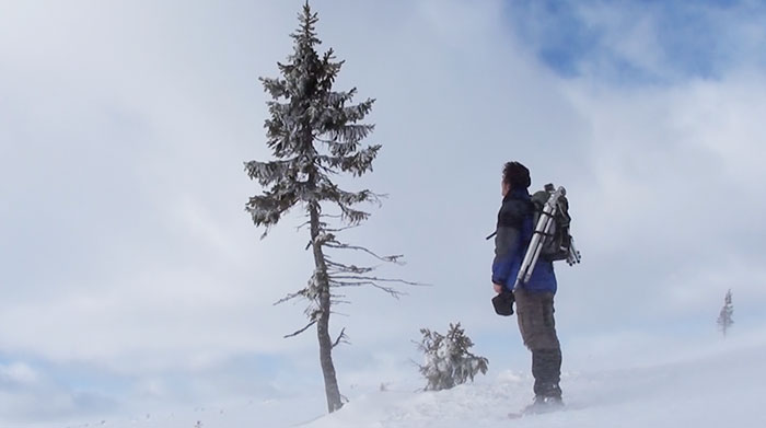 cel mai vechi copac din lume 3