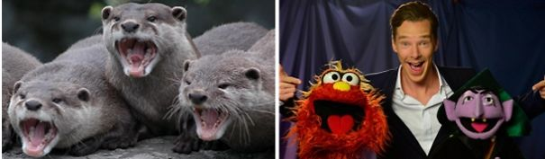 Benedict Cumberbatch Looks Like An Otter.
