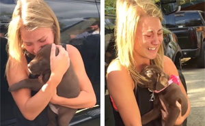 Guy Proposes To His Girlfriend With A Puppy And She Just Can't Hold Her Emotions