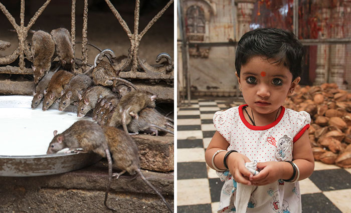 20,000 Rats Temple In India That I Visited Despite My Hygiene Worries