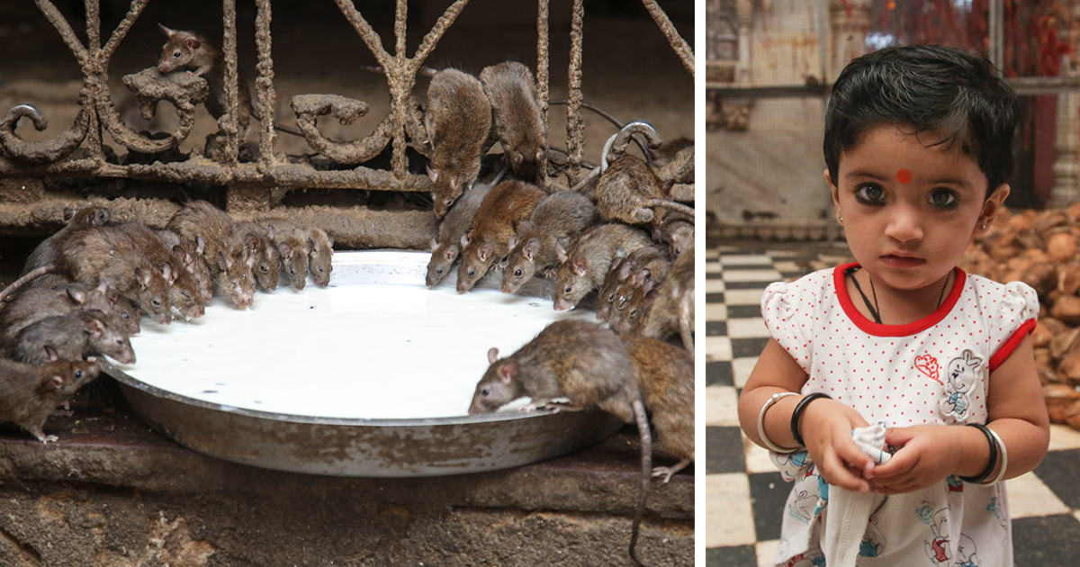how to avoid rats in india