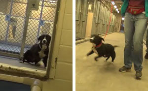 Shy Shelter Dog Can't Hold Back Emotions When He Realizes He's Been Adopted From A High-Kill Shelter
