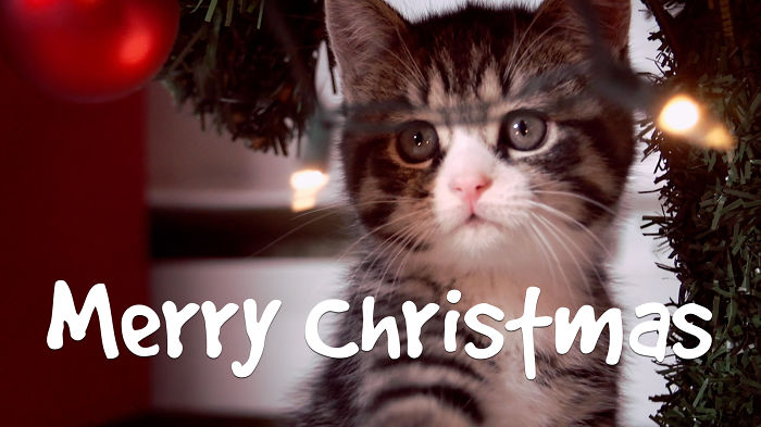 The Purrfect Cats Christmas Card