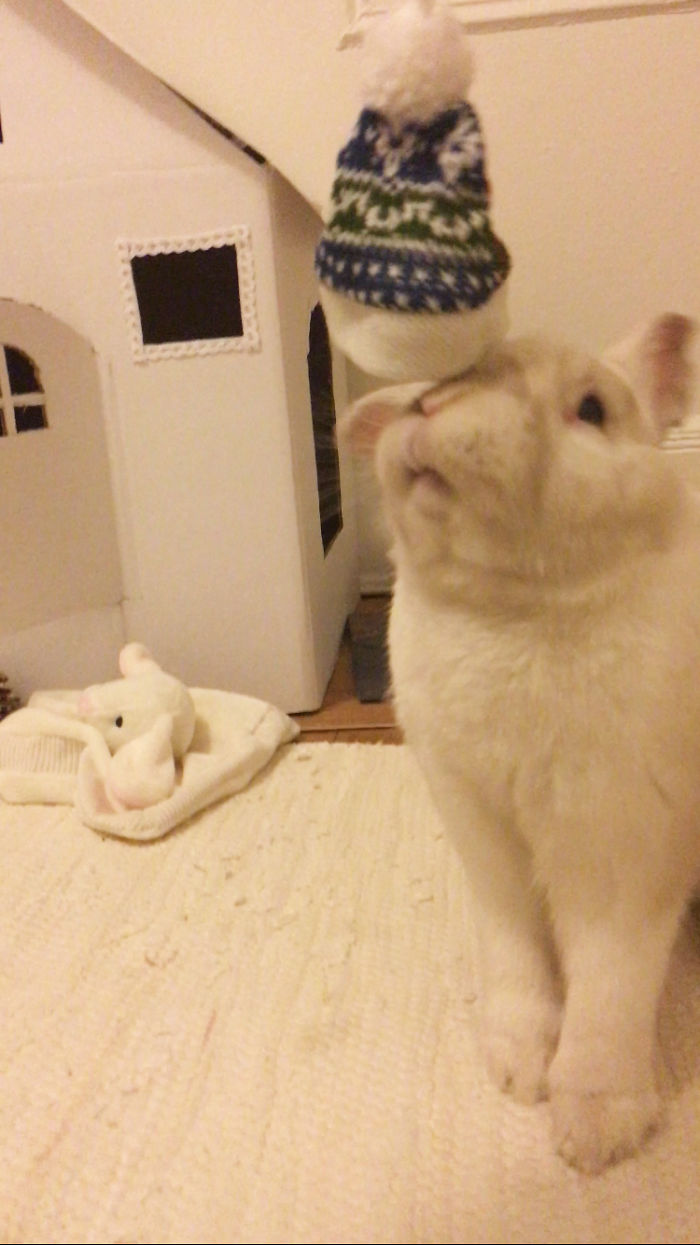 Our Bunny Received His Christmas Gift Early This Year And His Expression Was Priceless