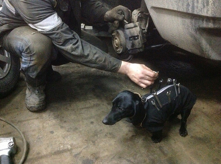 tool-dog-dachshund-suit-auto-mechanic-21