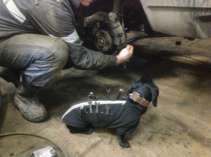 tool-dog-dachshund-suit-auto-mechanic-23