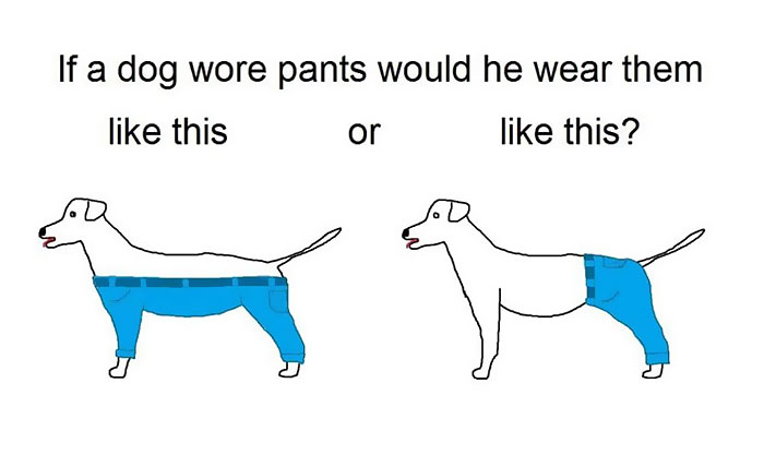 Time For Serious Questions: How A Dog Should Wear Pants?