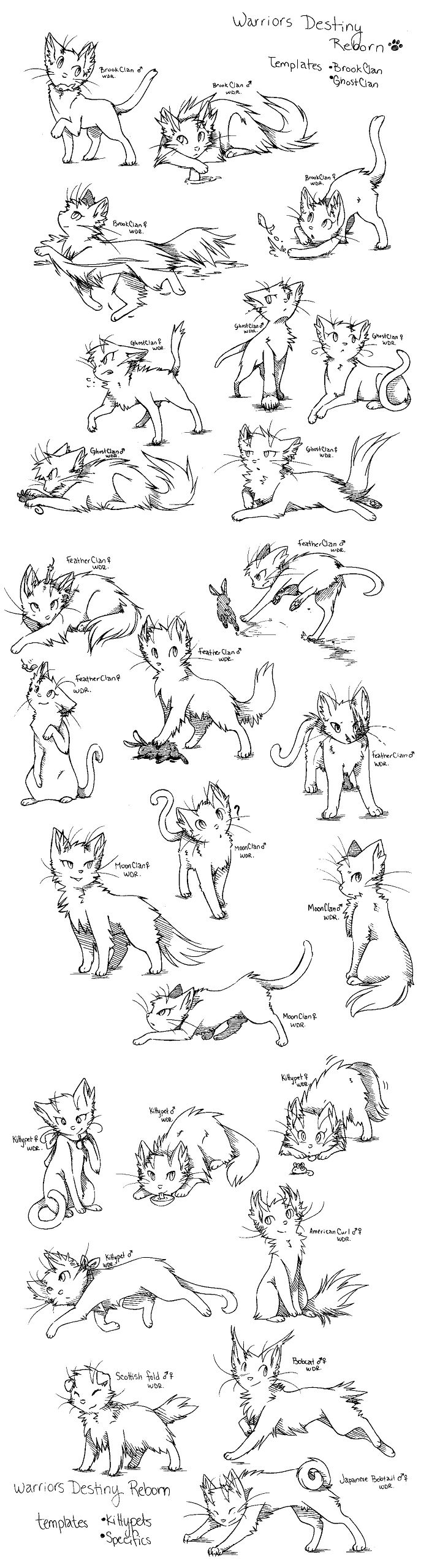 Warrior Cats Original Character Contest