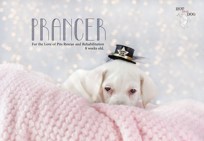 We Took Photos Of 12 Rescue Dogs And Created A Unique 2016 Calendar