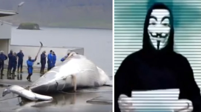 Iceland Kills Whales, So Anonymous Hackers Shut Down Its Government's Websites