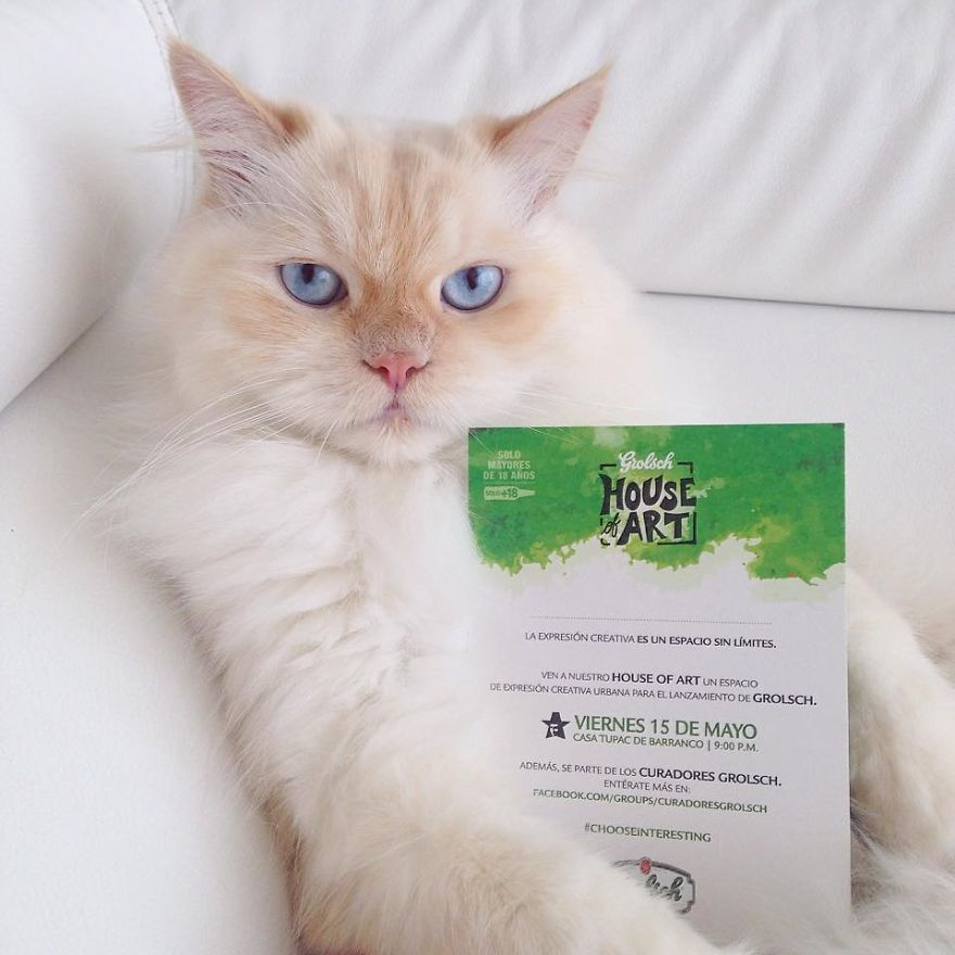 Whity The Cat Making A Promo Campaign For An Art Event