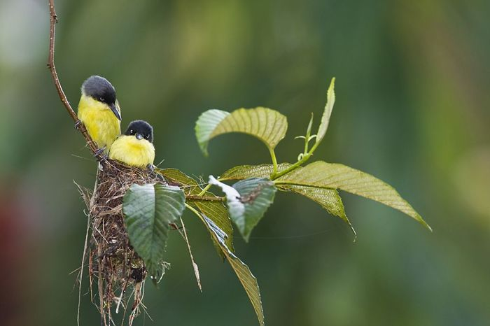 Mother Birds Work Hard To Raise Their Young.