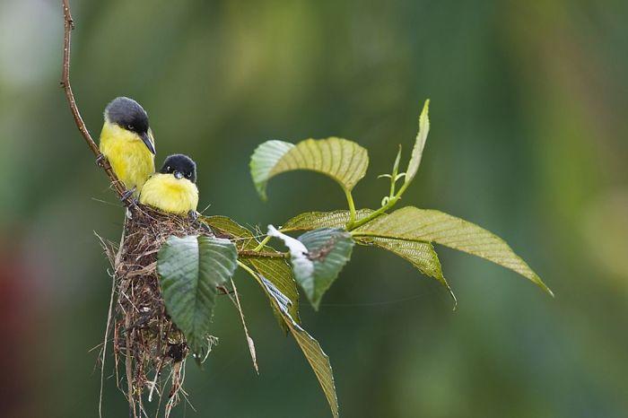 Madre Aves trabajar duro para criar a sus pequeños.
