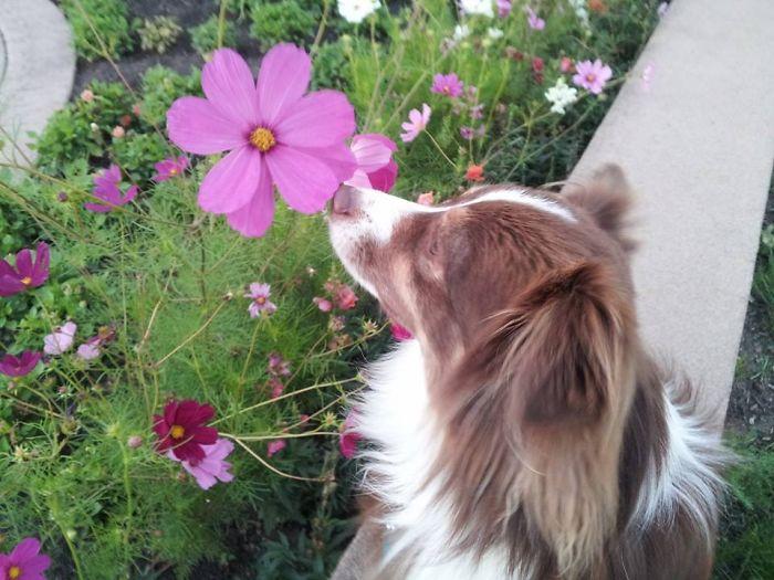 Poppy Sniffing A Poppy