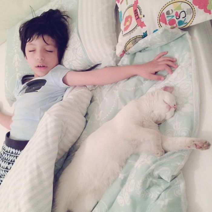 Our Neighbour's Cat Sleeps Every Night With My Son