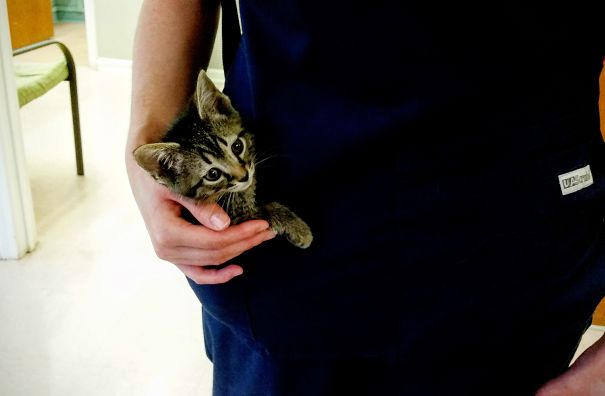 The Pocket Kitten I Got To Take Home From Work