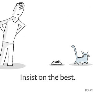 Life Lessons From Cats