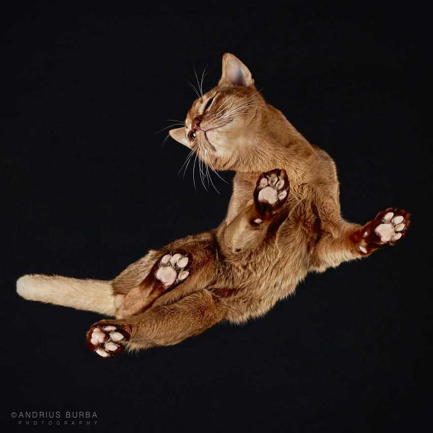 25+ Photos Of Cats Taken From Underneath