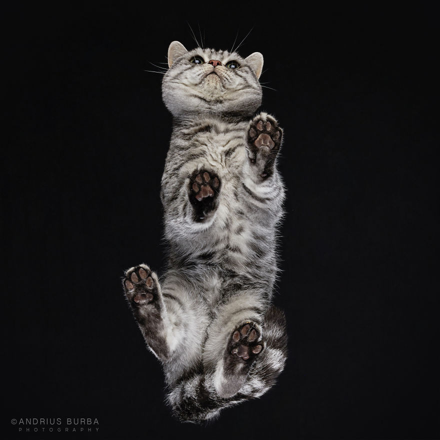 25-photos-of-cats-taken-from-underneath-5__880.jpg