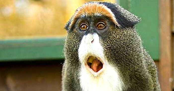 5+ Funny Shocked Animal Faces