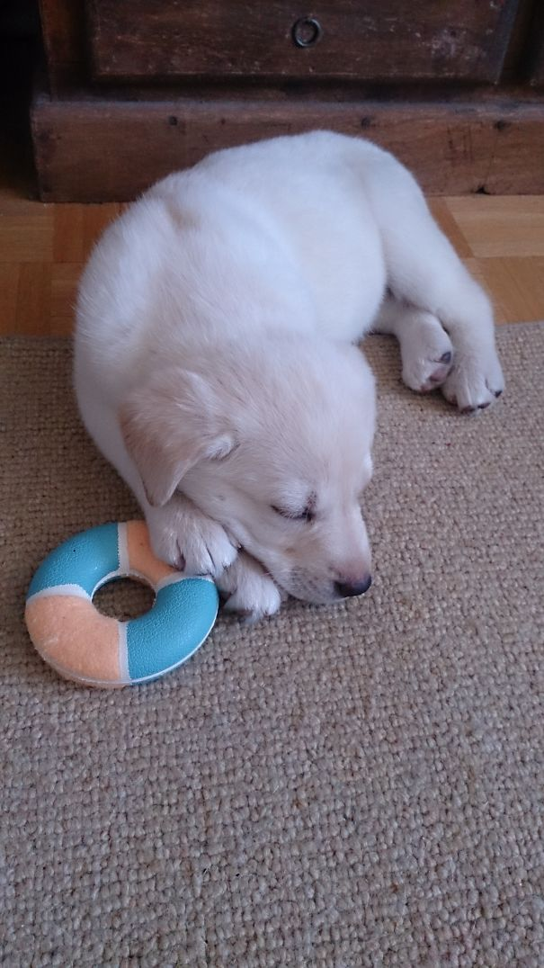 8 Weeks. Our Little Polar Bear :-)