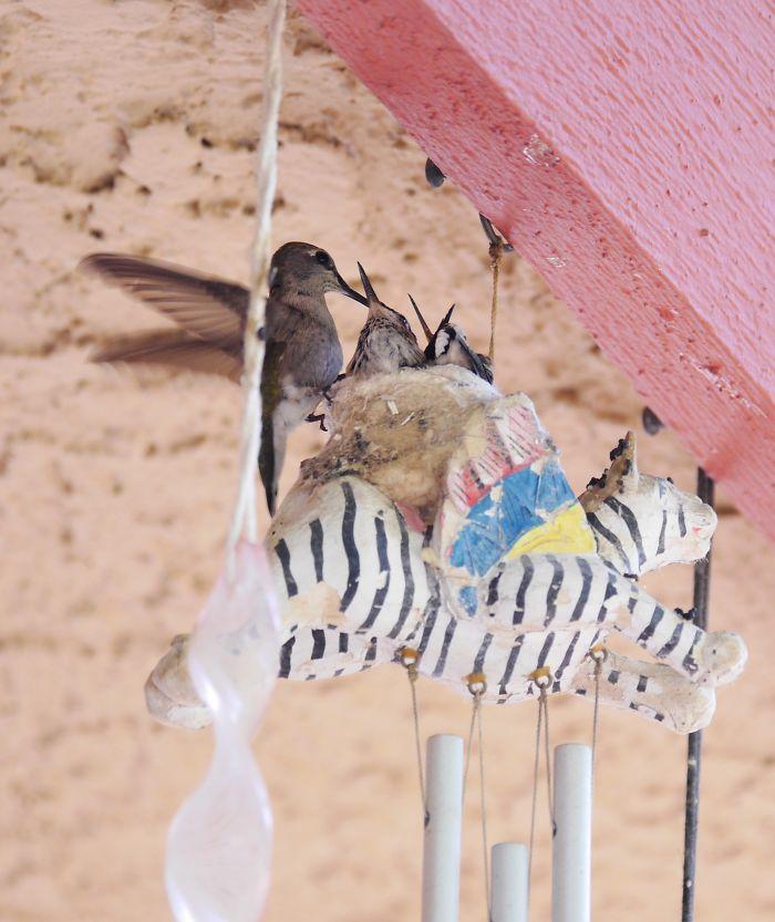 Hummingbirdnest In Wind Chime