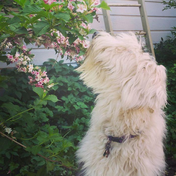 Annie The Sheepdog
