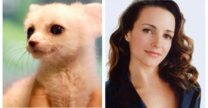 This Baby Fennec Fox Looks Like Kristin Davis