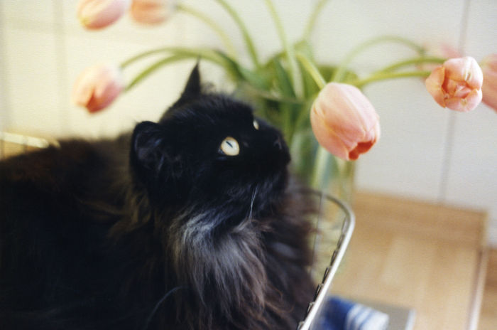 Our Beloved Justus, Who Died Two Years Ago, Loved Flowers!