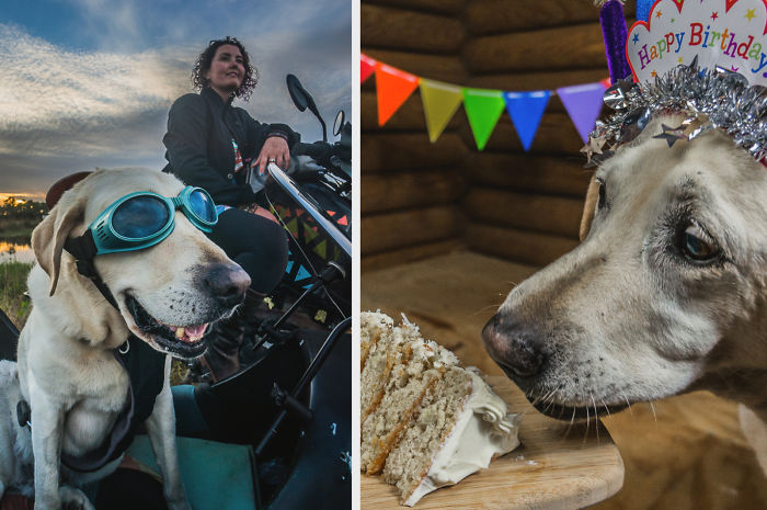 Motorcycle Dog Celebrates 11th Birthday On The Road!