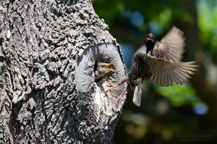 Starlings Along Law Washington 2015