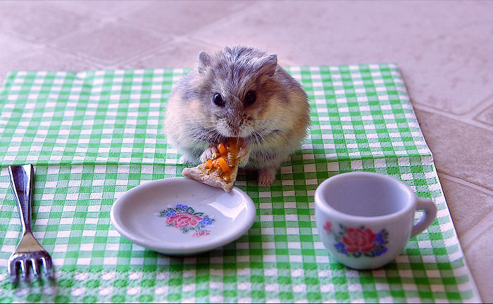 Tiny Hamster Eating A Tiny Pizza (from Youtube Video Of Same Name)